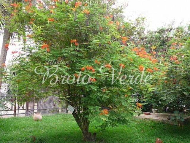 комнатные деревья фото и названия